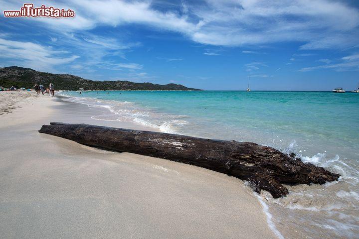 Un tronco sulla spiaggia saleccia nel desert foto for Quanto costa 10000 piedi quadrati