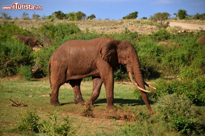 Le foto di cosa vedere e visitare a Tsavo