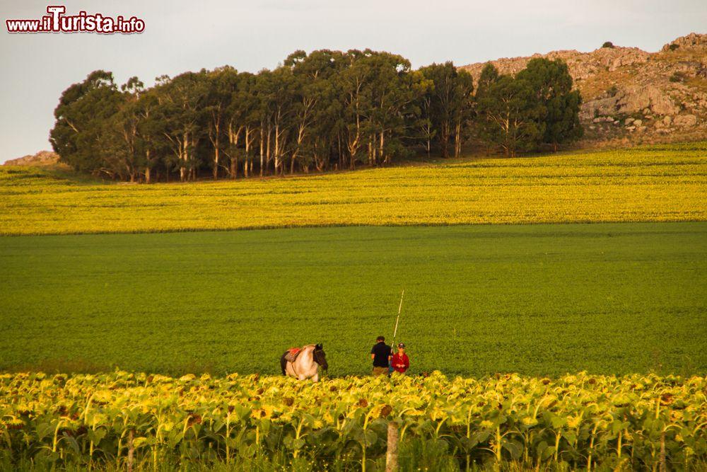 Una fattoria nelle campagne che circondano tandil for Progettazione di una fattoria industriale