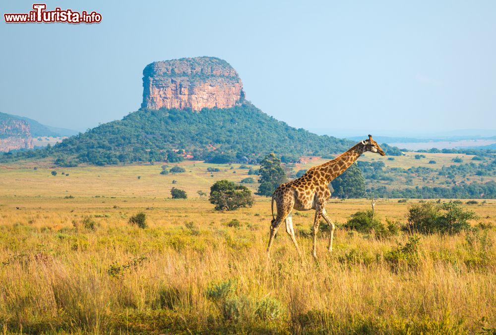 Le foto di cosa vedere e visitare a Limpopo