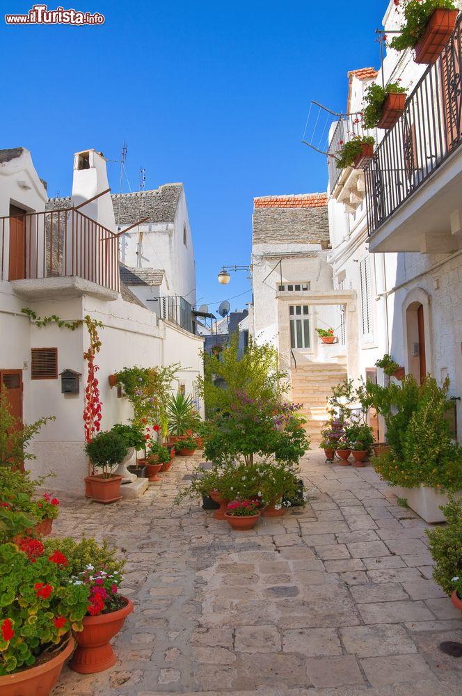 Una pittoresca strada nel centro storico di noci for Pianta di noci