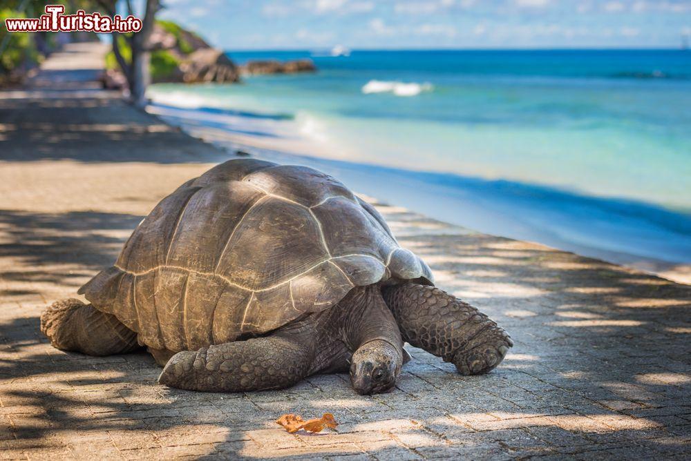 Le foto di cosa vedere e visitare a Aldabra