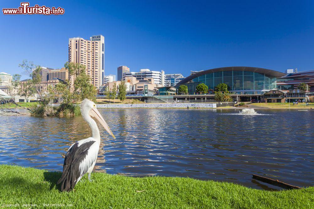 Le foto di cosa vedere e visitare a Adelaide