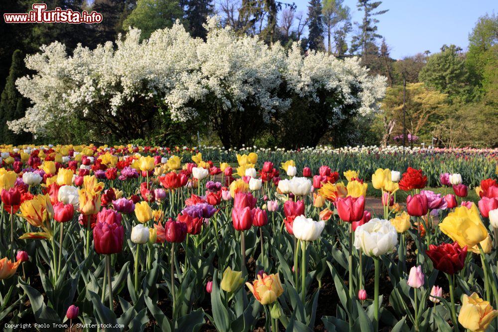 La Festa del Tulipano Verbania