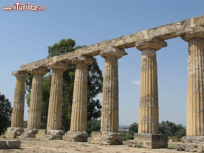 Le foto di cosa vedere e visitare a Metaponto