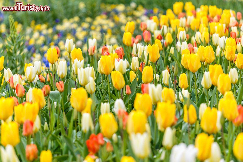 Il Narciso incantato  Piea d\'Asti
