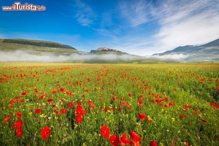 Le foto di cosa vedere e visitare a Castelluccio di Norcia