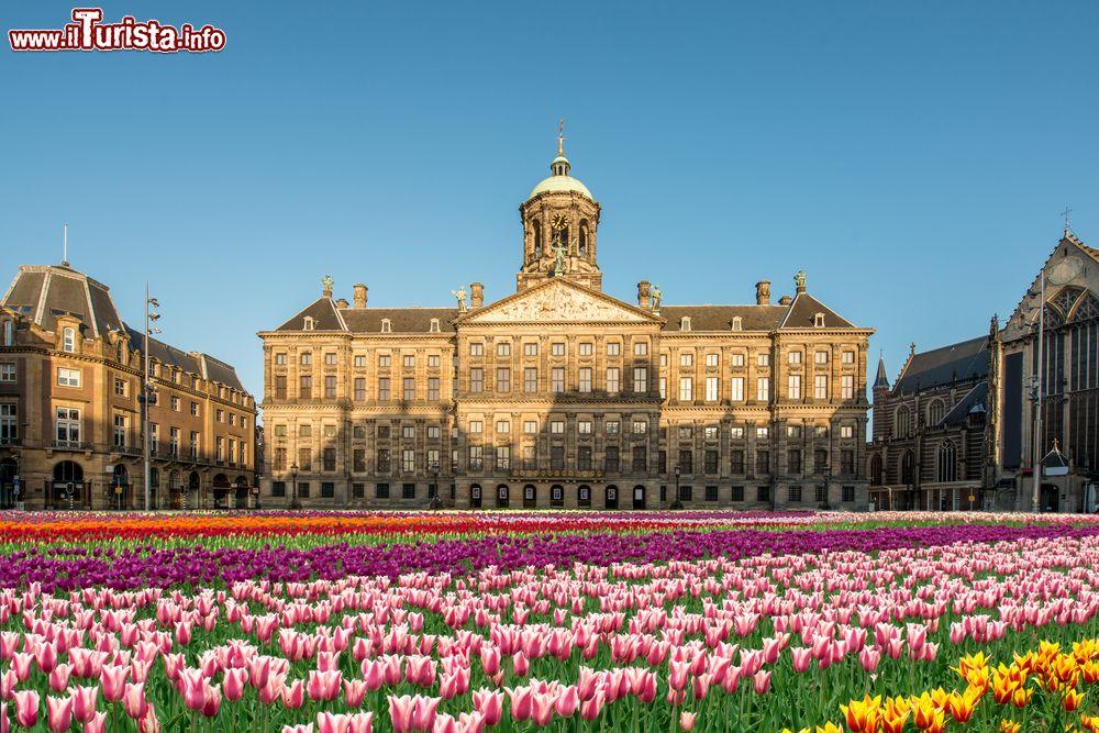 Il festival dei tulipani ad amsterdam date 2018 for Appartamenti piazza dam amsterdam