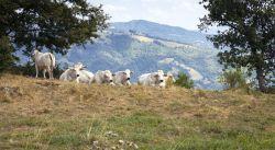 Immagini Bagno di Romagna Foto | Cose da fotografare Bagno di Romagna