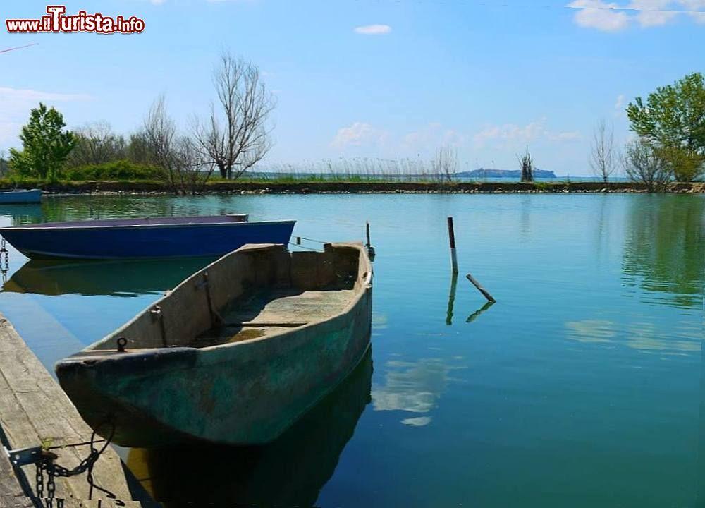 Le foto di cosa vedere e visitare a Carraia