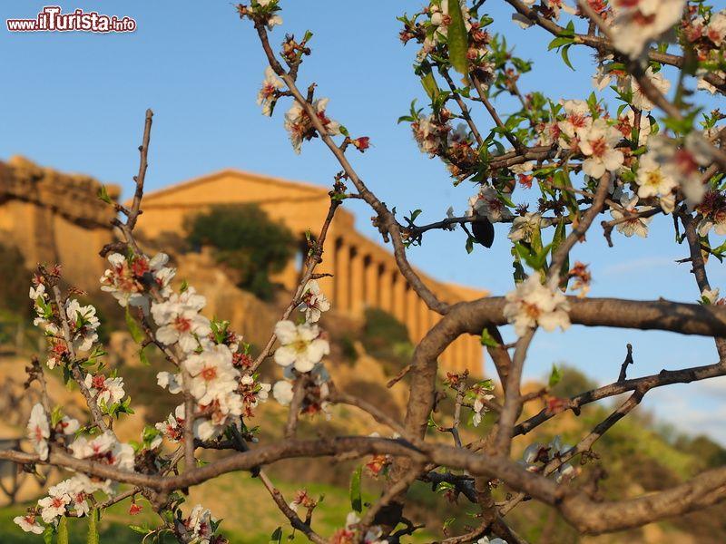 Festa del mandorlo in fiore Agrigento
