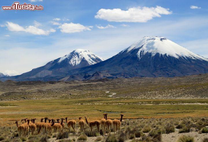 Le foto di cosa vedere e visitare a Arica