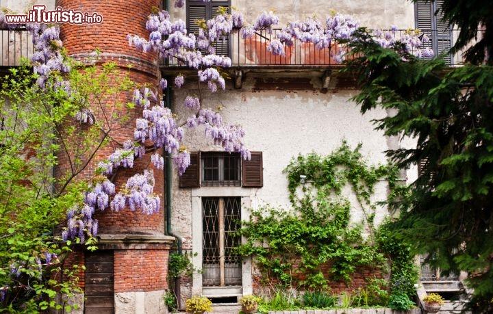 Il giardino detto anche orto botanico di brera foto for Giardino botanico milano