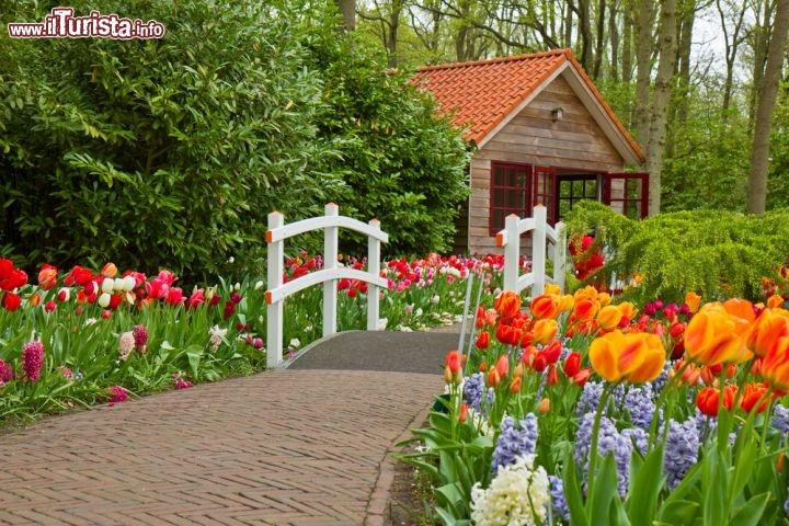 Tuilpani in fiore a lisse olanda qui si trova foto lisse parco keukenhof for Puglia garden city ny