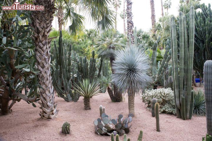 Una foresta di piante grasse all 39 interno foto - Giardino piante grasse ...