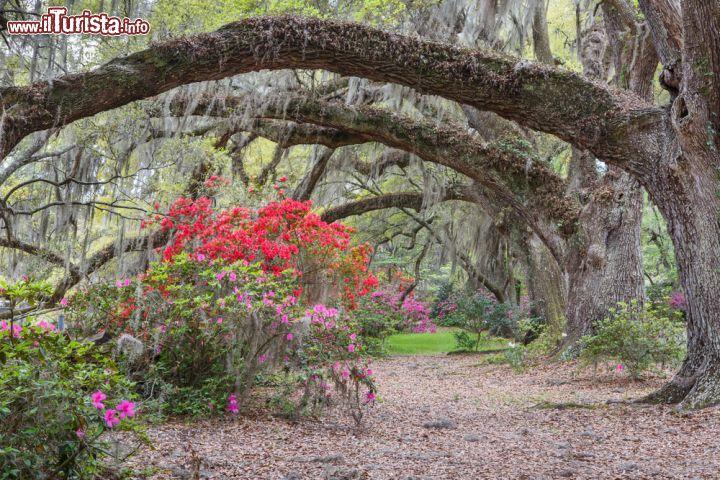 Cosa vedere e cosa visitare Magnolia Plantation and Gardens