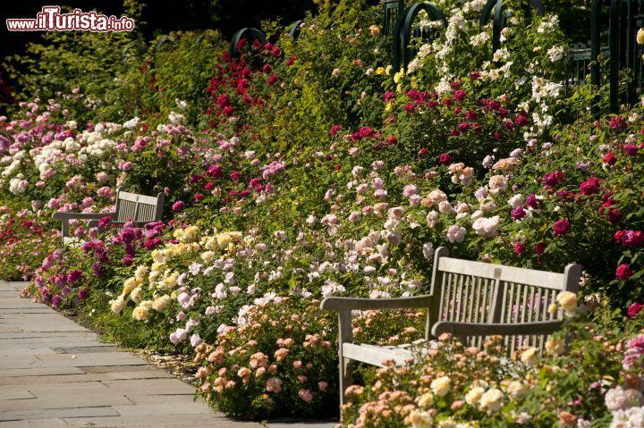 Il peggy rockefeller rose garden del botanical foto new york city new york botanical garden for Puglia garden city ny