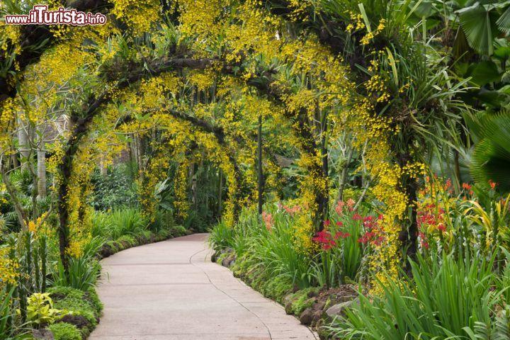 Cosa vedere e cosa visitare Botanic Gardens