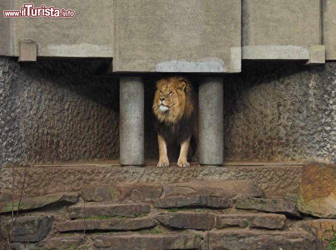 Cosa vedere e cosa visitare Artis Zoo Reale