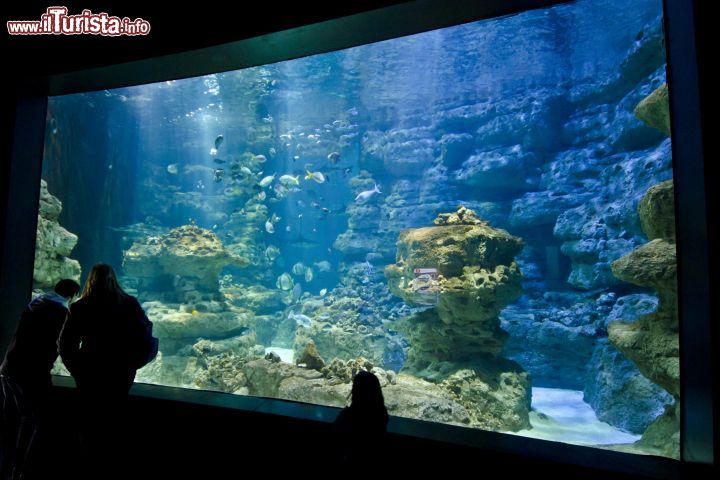 Cosa vedere e cosa visitare Acquario CineAqua