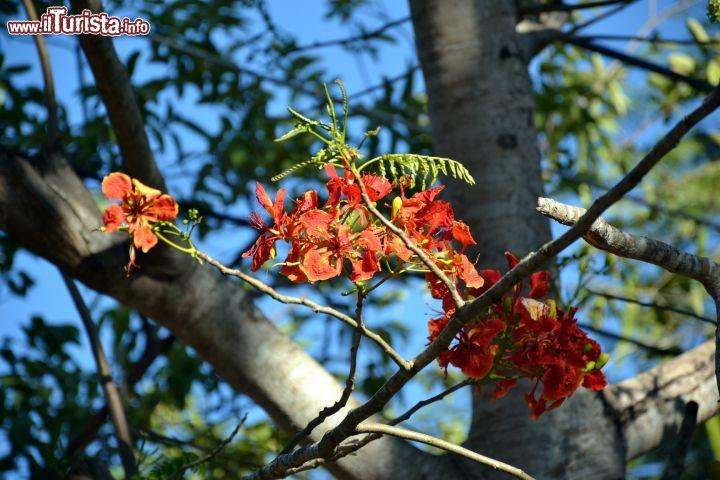 Cosa vedere e cosa visitare Foresta Arabuko-Sokoke