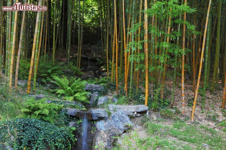 Il giardino dei bamb di villa carlotta foto for Pianta bambu prezzo