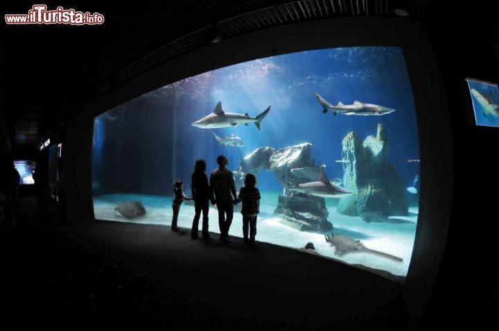 Cosa vedere e cosa visitare Acquario