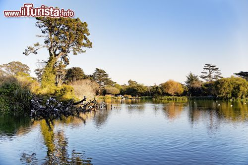 Immagine Il lago Stow lake all'interno del Golden Gate Park di San Francisco (USA)
