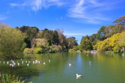 Bird watching nel Golden Gate Park di San Francisco, California - © Radoslaw Lecyk / Shutterstock.com