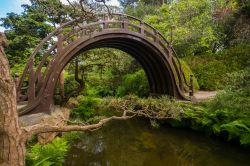 Moon bridge il ponte in legno nel giardino da the giapponese al Golden Gate Park a San Francisco, California.