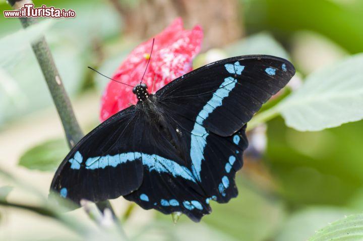 Cosa vedere e cosa visitare Casa delle Farfalle