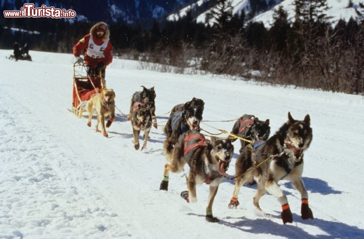 Dogsledding sulle nevi del Wyoming. Credit: The Wagner Perspective