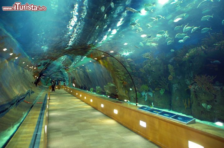 Il grande tunnel sottomarino del parco oceanografico for Oceanografico valencia