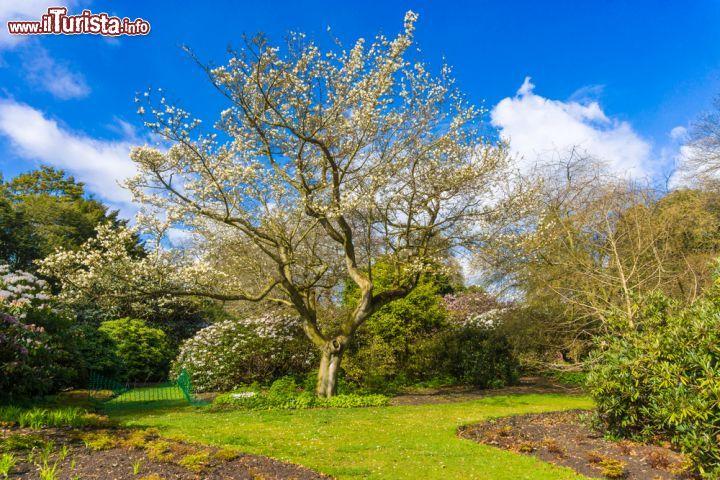 Il Giardino Botanico Reale Di Edimburgo In Una