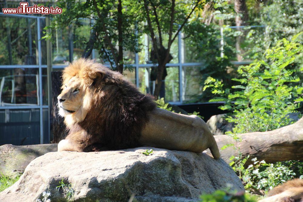 Cosa vedere e cosa visitare Tierpark Hellabrunn