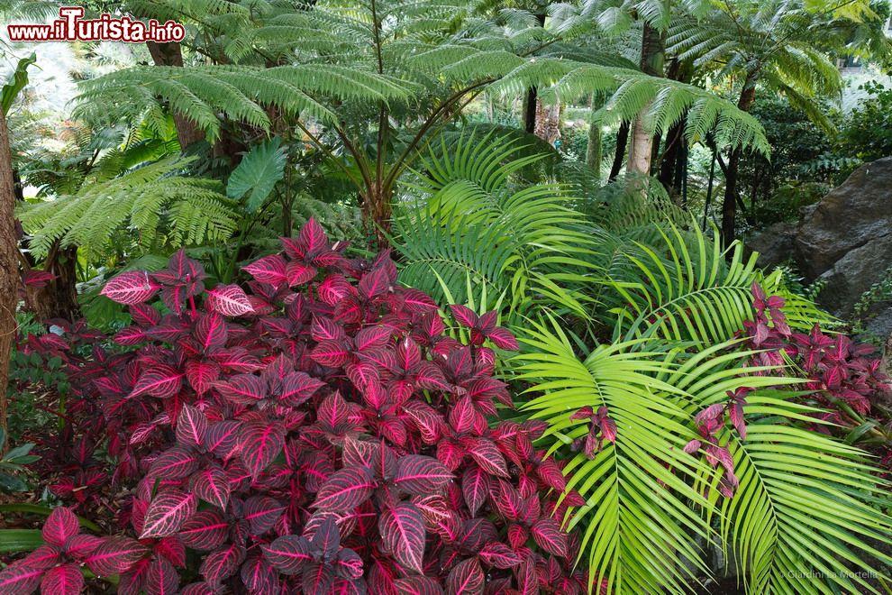Colori sgargianti delle piante del sottobosco foto for Piante da sottobosco