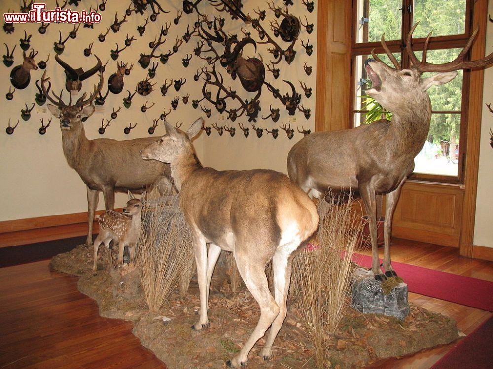 Cosa vedere e cosa visitare Museo regionale della fauna alpina