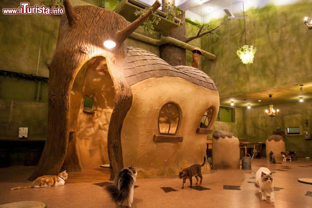 Cosa vedere e cosa visitare Kichijoji Petit Mura