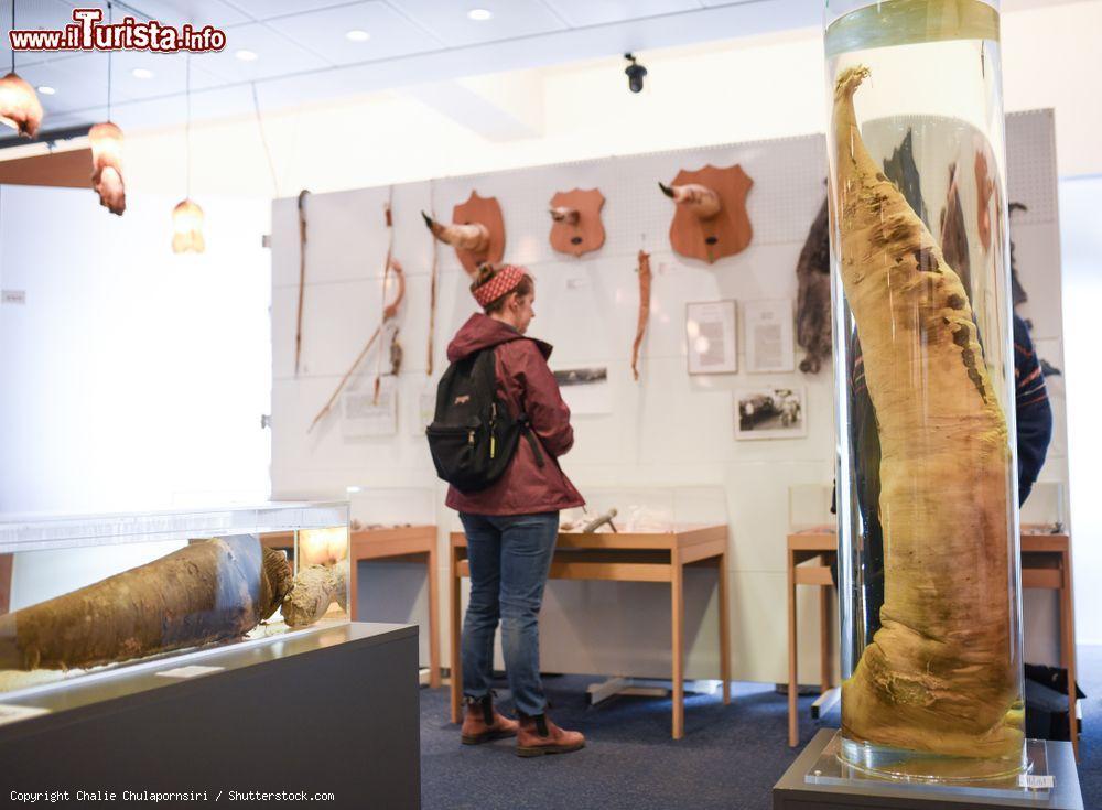 Le foto di cosa vedere e visitare a Reykjavík