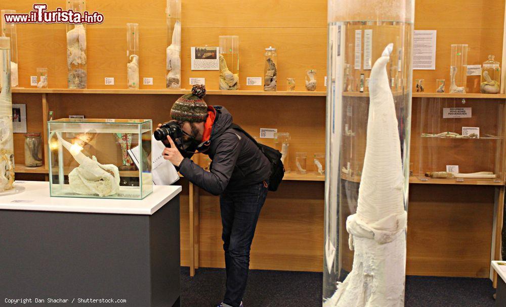 Cosa vedere e cosa visitare Museo Fallologico Islandese