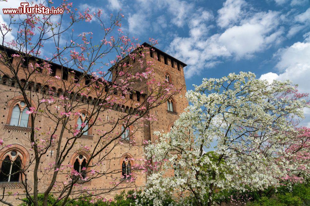 Cosa vedere e cosa visitare Castello Visconteo