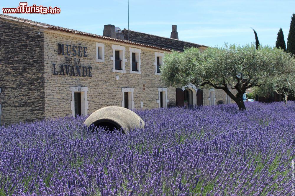 Il Museo della Lavanda a Coustellet in Provenza