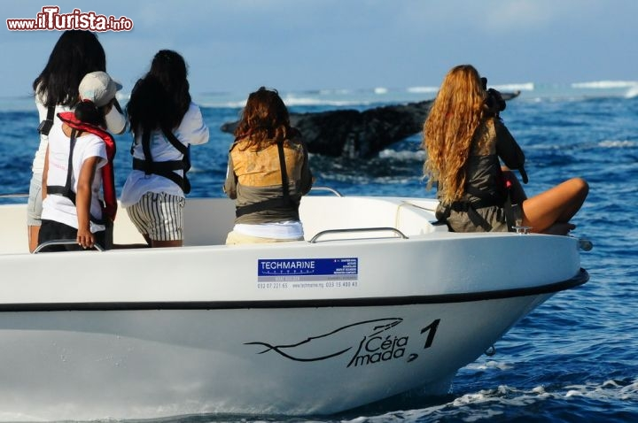 La magia del whale watching in Madagascar