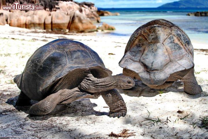 Le tartarughe giganti di aldabra copyright donnavventura for Tartarughe grandi