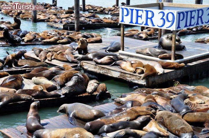 Cosa vedere e cosa visitare PIER 39