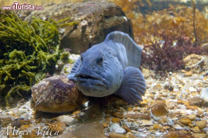 La rochelle pesci tropicali per visitare questo grande for Pesci per acquario tropicale
