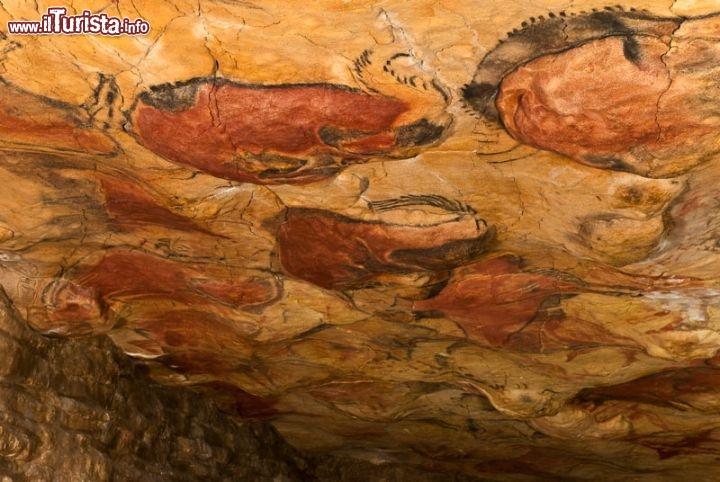 Cosa vedere e cosa visitare Grotta di Altamira