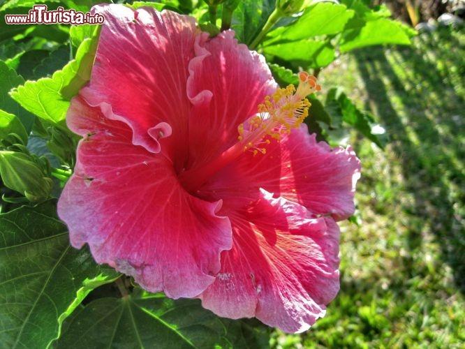 Fiori Gialli Isola Delba.Fiore Isola Di Mauritius La Flora Di Mauritius Comprende Fiori