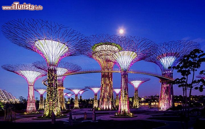 Immagine Singapore la foresta dei Supertrees Grove a Gardens by the Bay