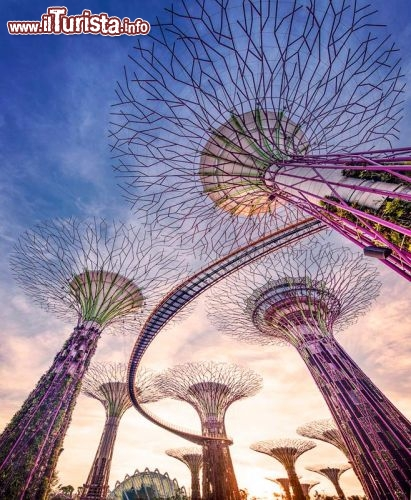 Immagine Super alberi Singapore Gardens By the Bay